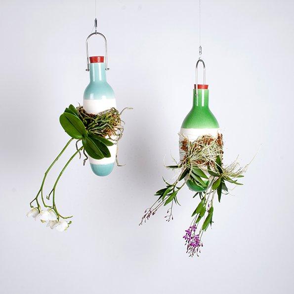 2 Epiphytes von Dossfiorito
