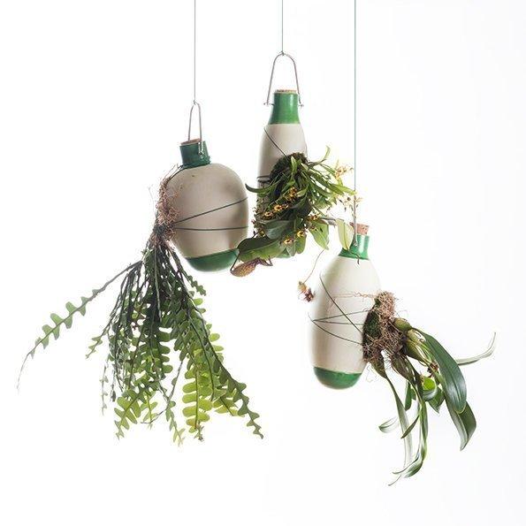 Epiphytes von Dossfiorito
