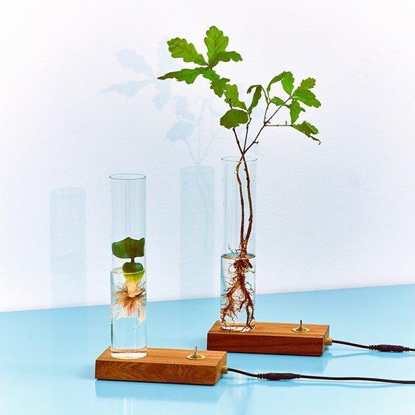 Green Dexter, , beleuchtet die andere Seite der Pflanzen