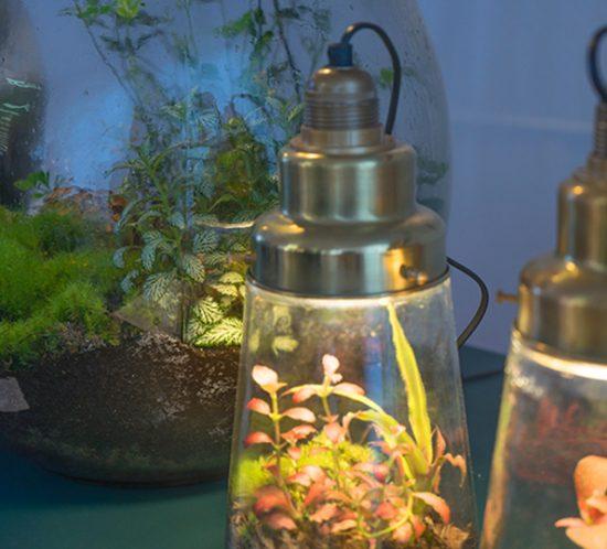 Big Brother und Pickles Ökosystem im GLas mit Lampe